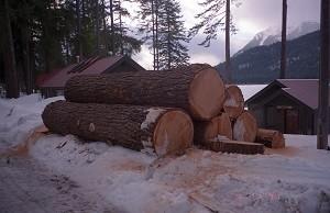 RF Logging